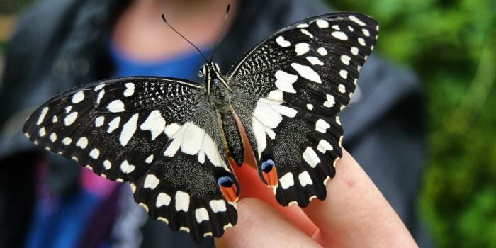 Sintiendo Mariposas, por C.P.
