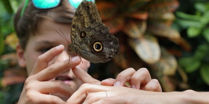 Sintiendo Mariposas, por S. N.